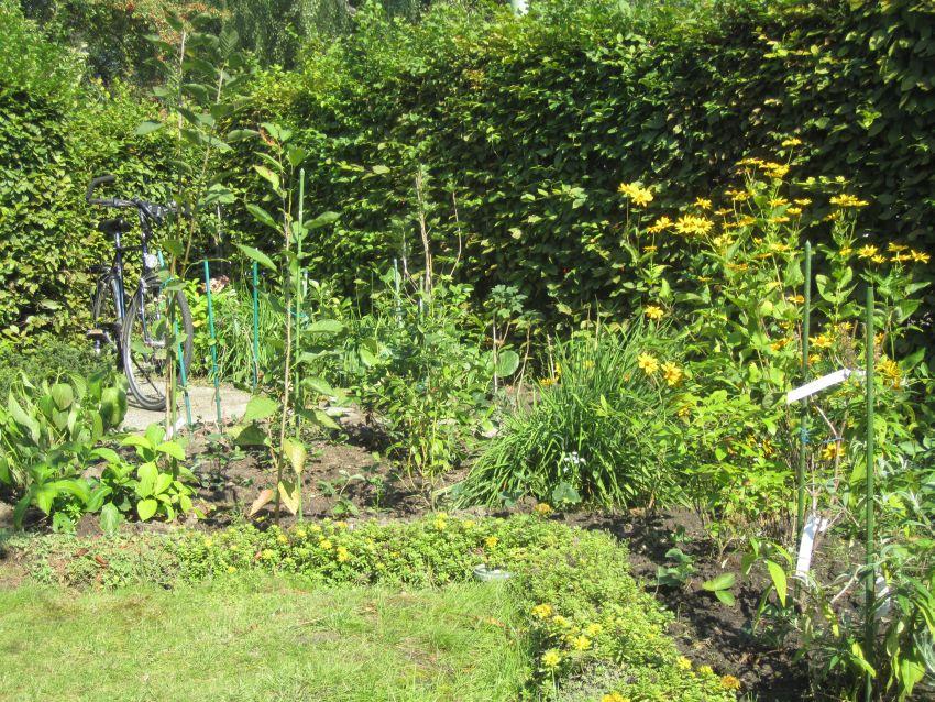 2011-08-10-Beeren