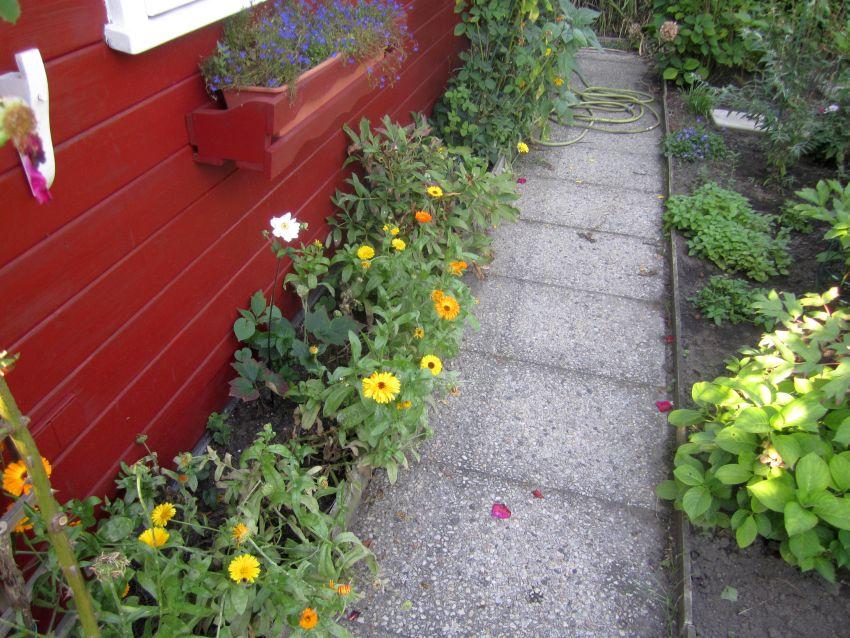 2011-09-09-Ringelblumen