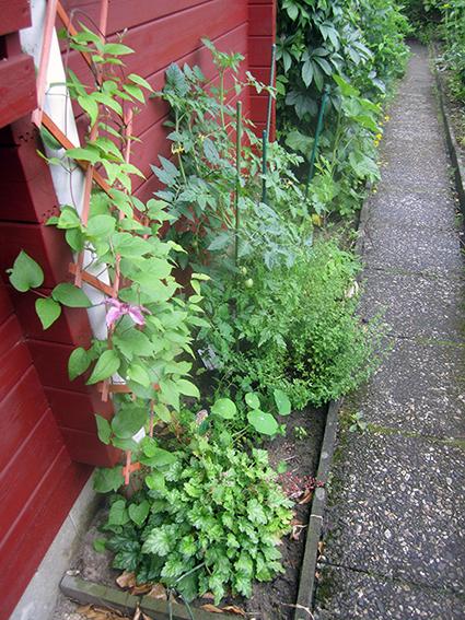 2012-06-24-Tomatenbeet