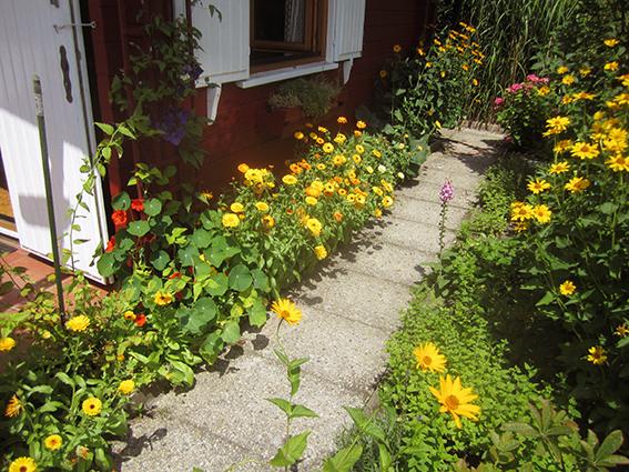 2012-06-25-Ringelblumen