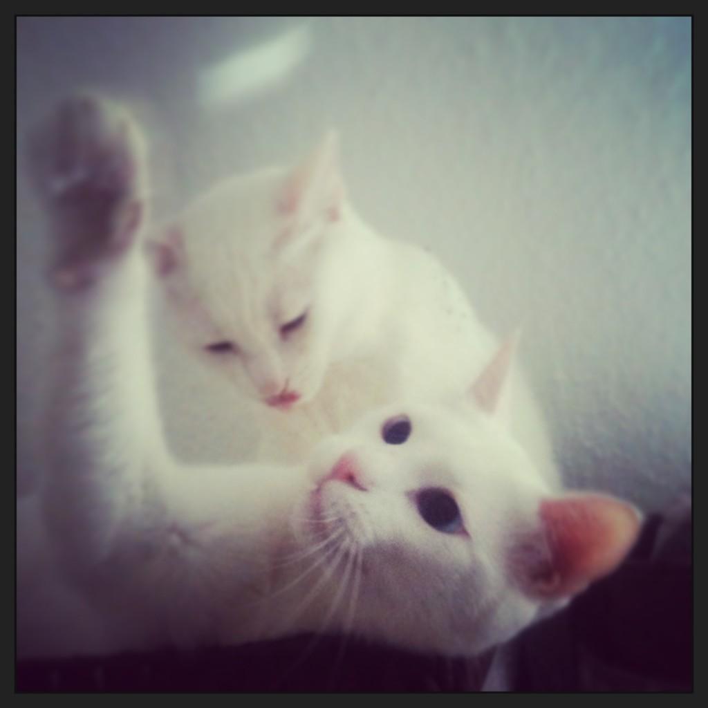 Coco und Cajus
